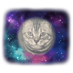 猫の日常猫スタ3