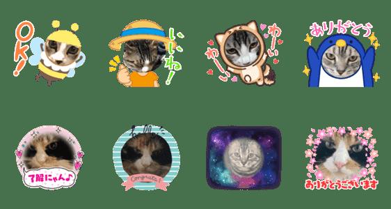 「猫の日常猫スタ3」のLINEスタンプ一覧