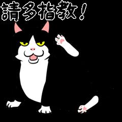 賓士貓Ohagi 2