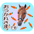 Honorific stickers with gentle horses