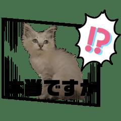 愛猫のせいかつNo.2