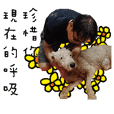 Aizhi Langjiu life miracle