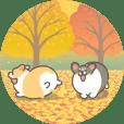 Autumn corgi animation sticker2