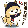 A sticker willingly. Pomeranian Winter