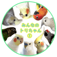 Everyone's bird is Cawaii! vol.1