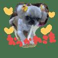 うちの愛犬メロン