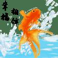 魚日常用語-夏天的涼爽