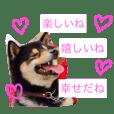 Japanese shibadog's sticker