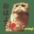 ここ猫関西弁②