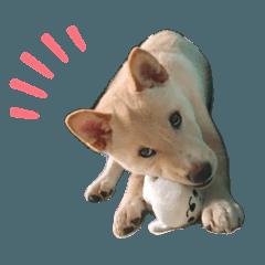 小狗ㄉ日常