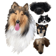 rough collie and friends