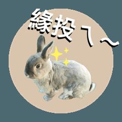瑞士捲兔兔很台