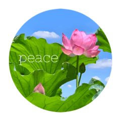 The lotus  & Gentle words