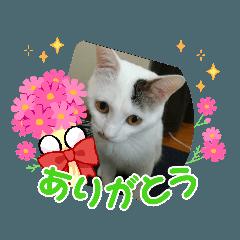 RinRin_20210918230413