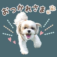 Azuki's sticker!