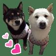 Kuroshiba SOU & Shiroshiba LEO