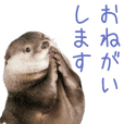 "Sticker of otter""Takechiyo"""