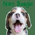 Nimo Beagle