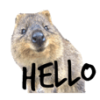 Real Quokka stickers