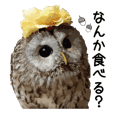 Owl's garden Sticker