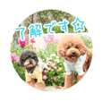 Robin & Jake of toy poodle