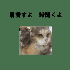 姉妹猫スタンプ