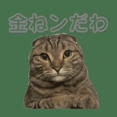たぬき猫まる