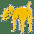 toy poodle Ramraim