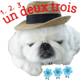 French Pekingese