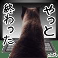 猫友リアル写真スタンプ