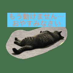 敬語すたんぷ猫