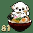 シーズー犬 81『ラーメン』