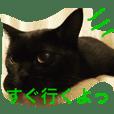 """black cat """"choco''2"""