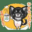 Black Tan Chihuahua pom Korean Ver.