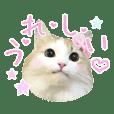 アイドル猫スタンプ ココ王子ファミリー