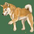 柴犬!の道(ていねい・敬語編)