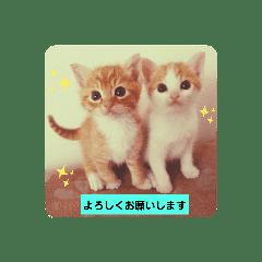 兄弟猫・みかんとみるくの日常