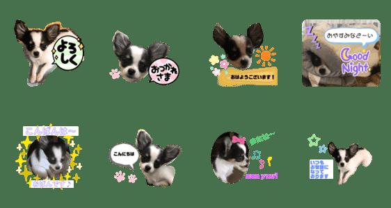 「ホルスタイン犬チワワのナナちゃん挨拶編」のLINEスタンプ一覧