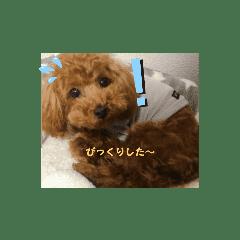 可愛いい自分の犬❤