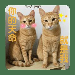 かわいい猫たち♪( ´θ`)ノ