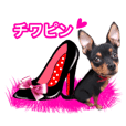 ChihuahuaPingWithPinkHeels