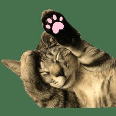 みちゃんの猫たち