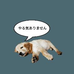 Meme-chan Stickers