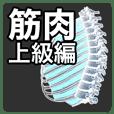 muscle-geek sticker advance