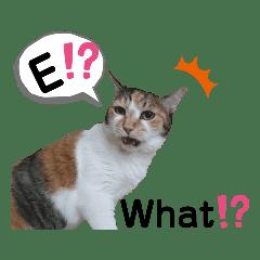 猫論〜Romajiと英語で5匹の猫がおしゃべり!