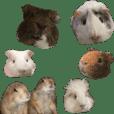 guinea pig and prairie dog stamp