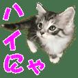 ゴージャスな猫のつぶやき5