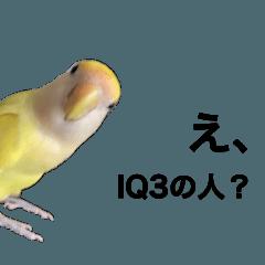 Aurorapoco_20211017145614