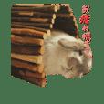 Rabbit Pine