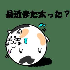毒舌ゆる猫